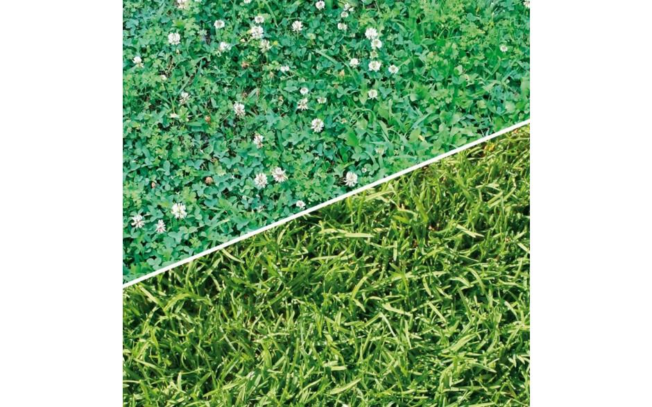 Engrais pour gazon avec herbicide minéral NPK 22-5-5 + 2.4D+Dicamba - granulé - utilisation